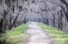 Mystic Path